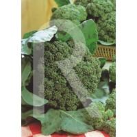 Bolsa Semillas Broculi Verde Italiano Calabres