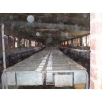 Granja de Conejos en Plena Produccion