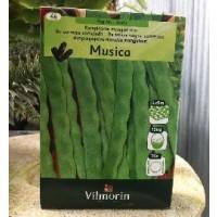Semillas Judia Musica Enrame Caja 350 Ud
