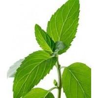 Menta Verde  Aromatica. 2400 Semillas.