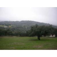 Terreno de Encinas para Casa en la Sierra de Tentudía, Extremadura