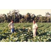 Comprar plantas eucalipto venta online y precios agroterra for Viveros forestales en colombia