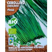 Cebollino Praga. Cultivo Ecologico. 0,5 Gr / 400 Semillas