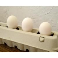 Huevos para Incubar de Gallina Castellana. 12 Unidades
