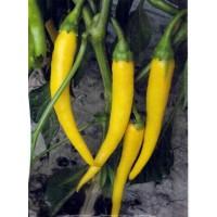 Pimiento de Cayena Amarillo Picante. Chile. E