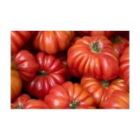 Semillas Ecológicas de Tomate Costoluto Fiore