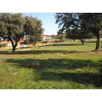 303 Has. Finca Ganadera Encinas y Alcornoques en Badajoz