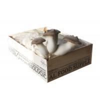 Mico-Box: Seta de Cardo (Pleurotus Eryngii)