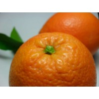 Naranjas de Castellon en 24 Horas.