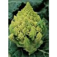 Semillas Brocoli Verde Romanesco