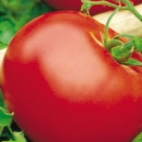 Tomate Tres Cantos. Semillas Ecológicas 0.25 Gr