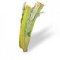 Plantas de Cardo en Bandeja de 6 Unidades