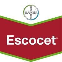 Escocet, Insecticida Tratamiento Semillas Bayer