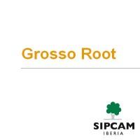 Grosso Root, Abono con Aminoácidos NPK 9-4-3 con Micronutrientes Sipcam Iberia