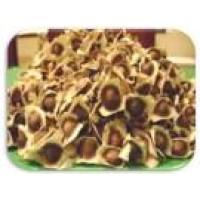 Semillas de Moringa Oleifera
