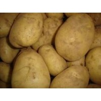 Patata Kenebec Siembra 25 Kg Nacional Alava