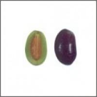 Olivo Farga en Maceta de 17 Cen