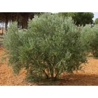 Q-Herbatox 40, Herbicida AJF