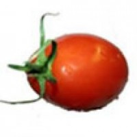 Planta 1 Tomate Cherry Bombilla Roja en Macet
