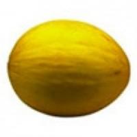 Planta Melón Amarillo en Bandeja de 80 Unidades