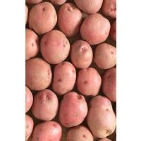 Patata Red Pontiac Siembra 25 Kg Nacional Alava