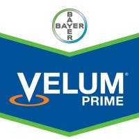 Velum Prime, Nematicida-Fungicida de Bayer