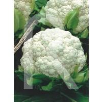sobre Semillas Coliflor Flora Blanca (Medio Precoz)