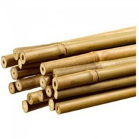 Tutor Bambú 210 Cm 18/20 Mm