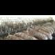 Foto de Granja de 2500 Tocinos en EJEA de los Caballeros, 7HA de Tierra del Saso