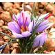 Foto de 20 Bulbos de Azafran, Crocus Sativus. Origen la Mancha.