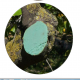 Más imágenes de Sellapro B Pasta Cicatrizante Selladora de Poda de Probelte