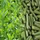 Más imágenes de Alfalfa Deshidratada Saco 10Kg. Peletizada