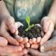 Más imágenes de Vitalplant Abono Foliar con Aminoácidos, Extractos Vegetales y Hierro (3 en 1)