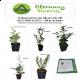 Más imágenes de Lote 50 Plantas de Seto